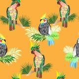 Bezszwowe tekstura kakadu papugi ilustracja wektor
