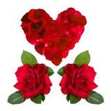 Bezszwowego deseniowego czerwonego serca różani płatki Zdjęcie Stock