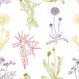 Bezszwowego koloru dekoracyjny wzór z ziele Wektorowy Illustratio Obraz Stock