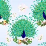 Bezszwowego tekstura pawi piękna tropikalni ptaki na gałąź z poślubnika filodendronu i ficus akwareli rocznika wektoru illustrat ilustracji