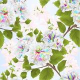 Bezszwowego tekstury gałąź koloru poślubnika kwiatów natury tła akwareli tropikalnego rocznika wektorowy ilustracyjny editable ilustracji