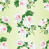 Bezszwowego tekstury gałązki krzaka białego rododendronowego halnego rocznika wektorowy ilustracyjny editable Obraz Royalty Free