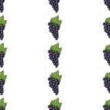 Bezszwowi deseniowi tło winogrona Zdjęcie Royalty Free