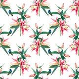 Bezszwowi deseniowi tulipany i hummingbirds Zdjęcia Royalty Free