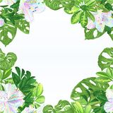 Bezszwowi ramowi tropikalni kwiatu kwiecistego przygotowania piękni stubarwni różaneczniki z Schefflera i Monstera vintag royalty ilustracja