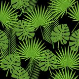 Bezszwowi tropikalni liście - palma, monstera Obrazy Royalty Free
