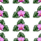 Bezszwowi wzór egzot, jaskrawy - zieleni monstera liście i różowe orchidee odizolowywający na przejrzystym tle, ilustracja wektor