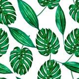 Bezszwowi wz?r zieleni akwareli li?cie royalty ilustracja
