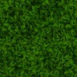 Bezszwowi zieleni liście deseniują wiosny lub lata świeżego tło 10 eps royalty ilustracja