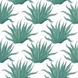 Bezszwowy agawa kaktusa wzór Obrazy Stock