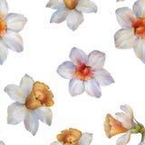 Bezszwowy akwarela wzór narcyzów kwiaty beak dekoracyjnego lataj?cego ilustracyjnego wizerunek sw?j papierowa kawa?ka dym?wki akw ilustracja wektor