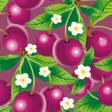 bezszwowy cherry wzoru Fotografia Royalty Free