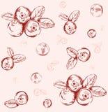 Bezszwowy cranberry wzór ilustracji