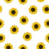 Bezszwowy deseniowy żółty słonecznik na białym tle, wektor eps 10 obrazy royalty free
