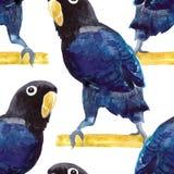 Bezszwowy deseniowy egzotyczny Africa Papuzi lovebird maskujący beak dekoracyjnego latającego ilustracyjnego wizerunek swój papie ilustracja wektor