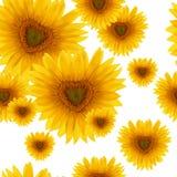 Bezszwowy deseniowy kwiatu słonecznik Fotografia Stock