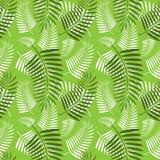 Bezszwowy drzewko palmowe liści wzór Fotografia Royalty Free