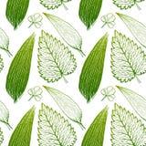Bezszwowy egzota wzór z tropikalnymi liśćmi na białym tle Zdjęcie Royalty Free