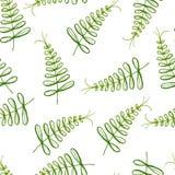 Bezszwowy egzota wzór z tropikalnymi liśćmi na białym tle Zdjęcia Stock