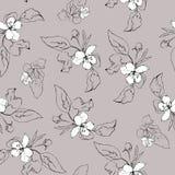 Bezszwowy elegancki deseniowy nakreślenie jabłczany kwiat Obraz Royalty Free
