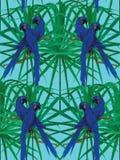 Bezszwowy hiacyntowy ary papugi wzór Zdjęcia Stock