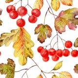 bezszwowy jesieni wzoru ilustracja wektor