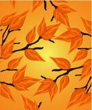 bezszwowy jesienny tło Zdjęcie Stock
