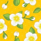 Bezszwowy koloru żółtego wzór z kwitnącym jaśminem obrazy stock