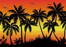 Bezszwowy krajobraz, palmy, ocean i ptaki, Obrazy Stock