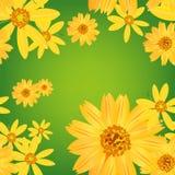 Bezszwowy kwiat & liście deseniujemy tło Obraz Royalty Free
