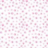 Bezszwowy kwiecisty wzór na białym tle Różowa wiśnia, śliwka, bonkreta, jabłczany okwitnięcie Wiosny i lata akwarela ilustracja wektor