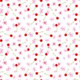 Bezszwowy kwiecisty wzór na białym tle Różowa wiśnia, śliwka, bonkreta, jabłczany okwitnięcie Wiosny i lata akwarela ilustracji