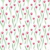 Bezszwowy kwiecisty wzór w menchiach, zieleń, czerwoni kolory Tulipany ilustracji