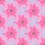 Bezszwowy kwiecisty wzór z różową chryzantemą zdjęcia royalty free
