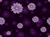 Bezszwowy kwiecisty wzór z różową stokrotką kwitnie na ciemnym fiołkowym tle Obrazy Royalty Free