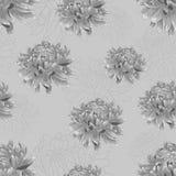 Bezszwowy kwiecisty wzór z srebnych szarość chryzantemami Zdjęcie Stock