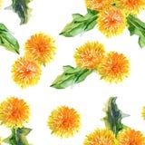 bezszwowy kwiecisty wzoru dandelions akwarela ilustracja wektor