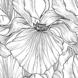 bezszwowy kwiecisty wzoru Kwiatu rytownictwa irysowy tło Obrazy Royalty Free