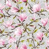 bezszwowy kwiecisty wzoru kwiaty magnolii Obraz Royalty Free
