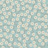 bezszwowy kwiecisty wzoru Kwitnie teksturę daisy Obraz Stock