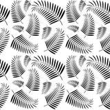 Bezszwowy monochromatyczny drzewko palmowe wzór Fotografia Royalty Free