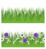 Bezszwowy pasek trawa, trawa i kwiaty, Obrazy Stock