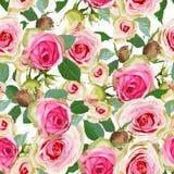 Bezszwowy różowy róża wzór Kwitnie Bezszwowego Deseniowego elementu wektoru tło ilustracja wektor