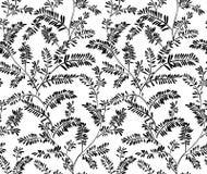 Bezszwowy stylizowany liść paproci wzór r?wnie? zwr?ci? corel ilustracji wektora Doodle backgrounded t?o bezszwowy wektora royalty ilustracja
