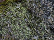 Bezszwowy Szorstki naturalny kamień z zieloną i białą mech teksturą zdjęcie royalty free