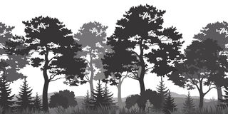 Bezszwowy tło, lato lasu sylwetki Zdjęcie Stock