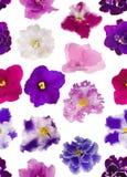 Bezszwowy tło od fiołkowych kwiatów Zdjęcie Royalty Free