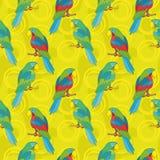 Bezszwowy tło, papugi Zdjęcia Royalty Free
