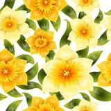 Bezszwowy tło z żółtym daffodil narcyzem Wiosna kwiat z trzonem i liśćmi Realistyczny wzór Zdjęcie Stock