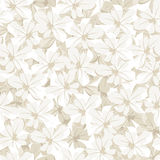 Bezszwowy tło z białymi kwiatami. Wektorowa bolączka Obrazy Royalty Free